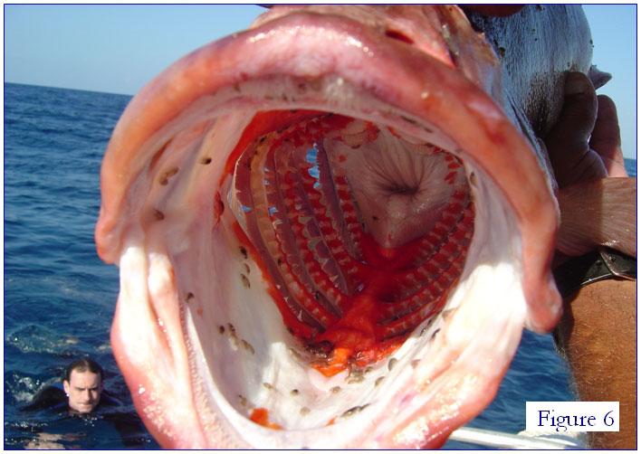 Isopods 002